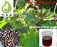 Pharmaceutical Grade Jamaican Castor Oil Used In Binder And Plasticizer