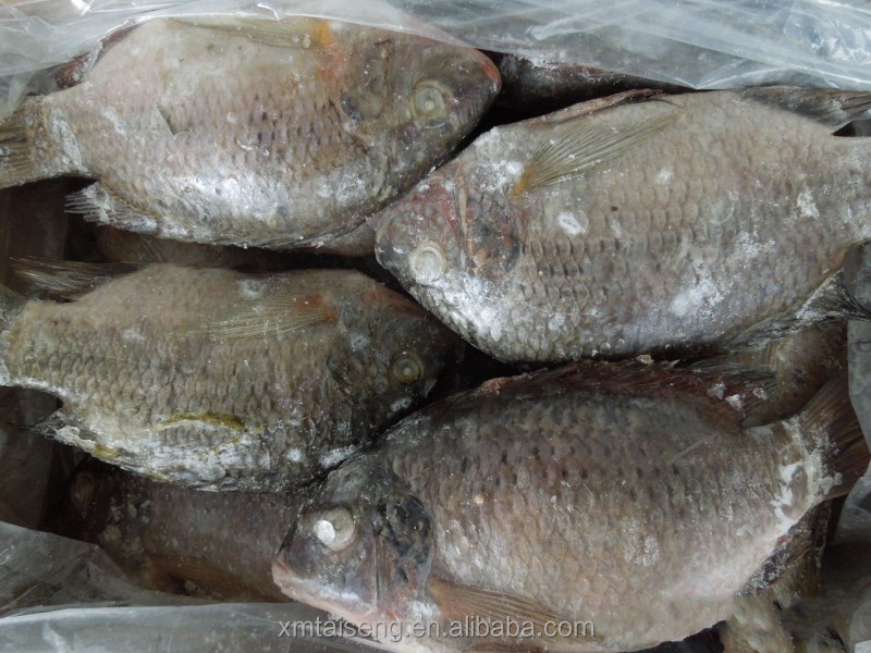 Frozen 5-7oz Black Tilapia Fish Fillet With Co Treated ...