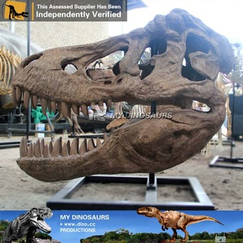 My-dino museum quality skeleton dinosaur fossil skull for sale