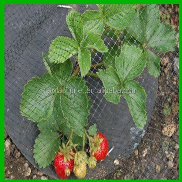Black Garden Bird Netting Protecting Strawberries From Birds Buy
