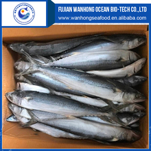 Frozen Fish Frozen Pacific Mackerel atlantic mackerel for canning food