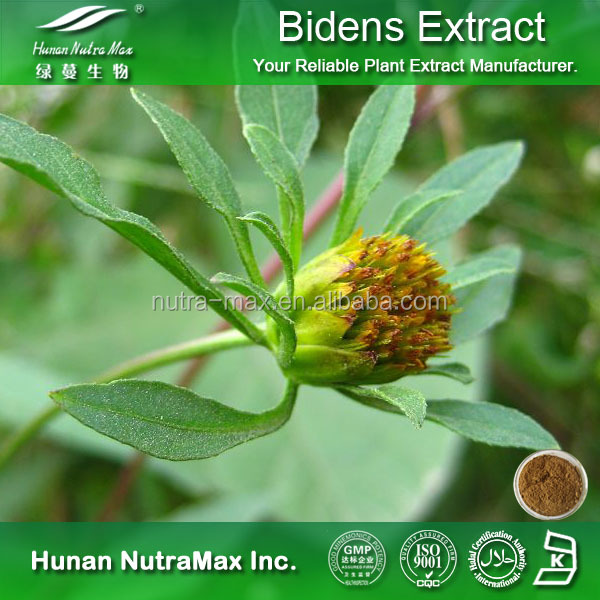 2016 New Product 100% Natural Bidens Pilosa Extract Powder /Bidens pilosa with Free Sample