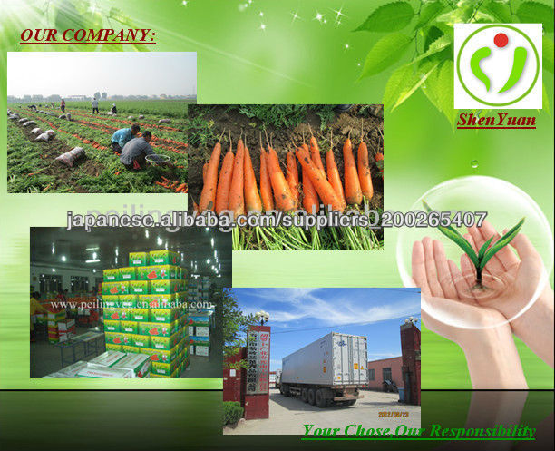2013 Hebei New Fresh Carrot