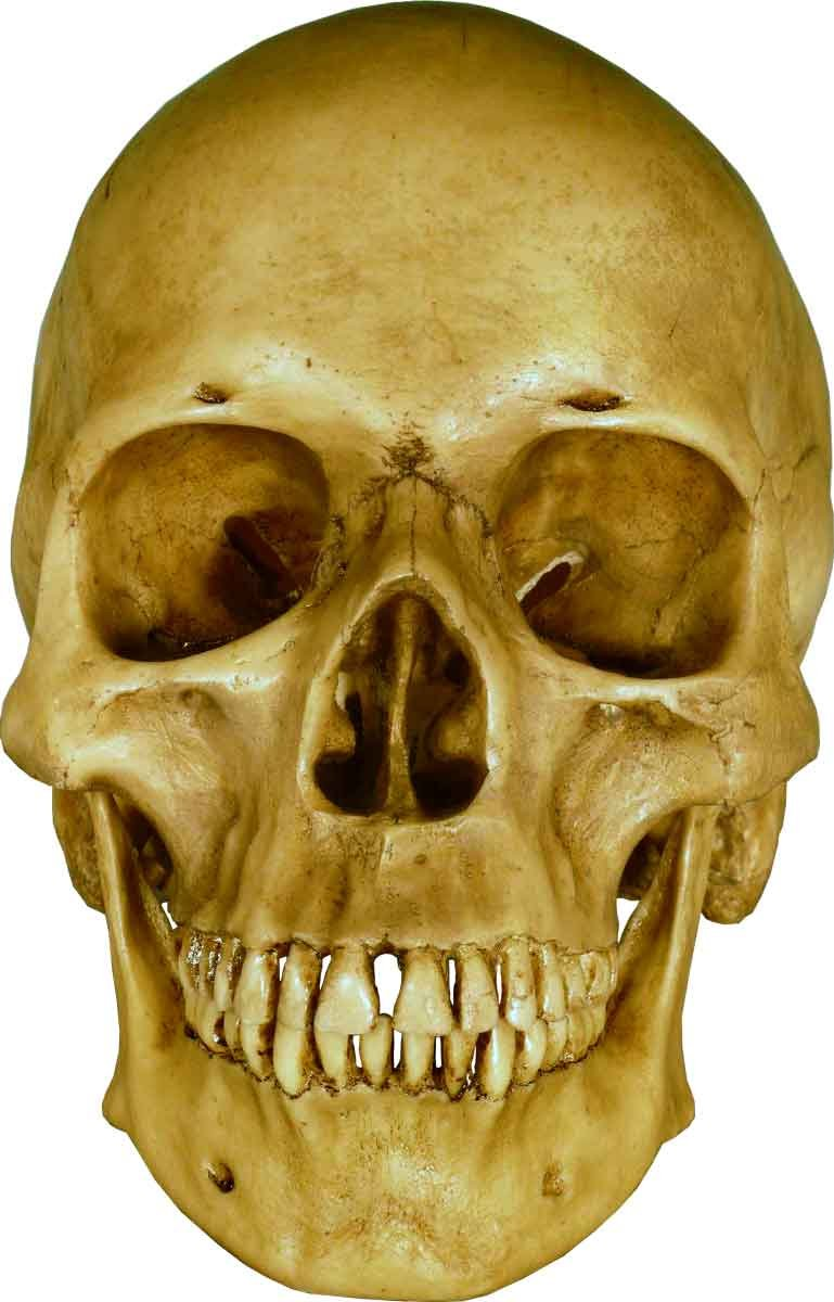 Life Size Model Human Skull Replica - Aged EARTH-BROWN Relic - Life Size Reproduction, Model 3093002 By Nose Desserts