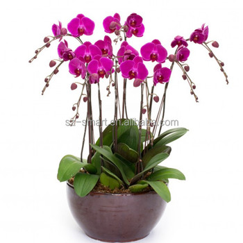 Dekorasi Anggrek Keramik Pot Bunga Buy Bunga Anggrek Pot Anggrek Pot Bunga Anggrek Pot Product On Alibaba Com