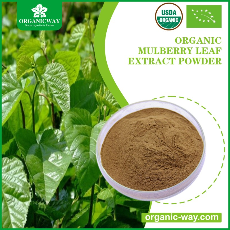 Factory price organic white mulberry leaf