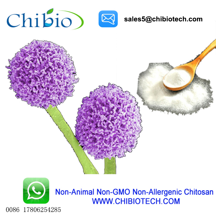15-1000cps Chitosan Hydrochloride Gold Price Water-soluble Chitosan - Buy  Chitosan Hydrochloride,Gold Price,Water-soluble Chitosan Product on
