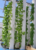 Good price PVC vertical hydroponic plant system pipe/channel for vegetable