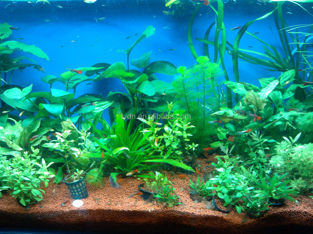 Aquarium Gravel For Artificial Coral Reef