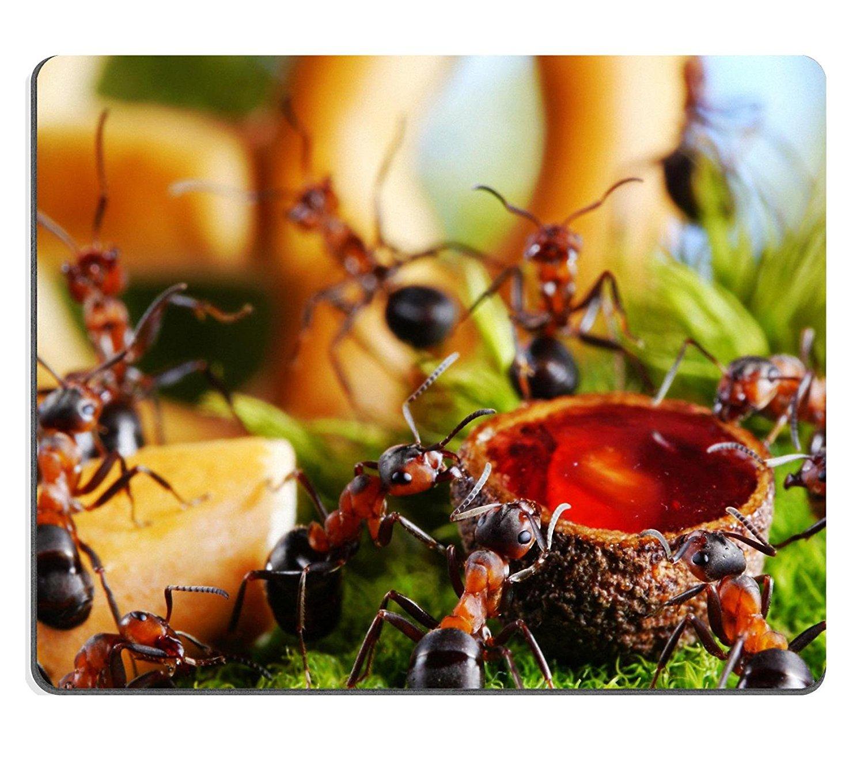 интерес зрителя картинка торт муравей цвете