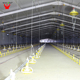 Wincore Automatic Poultry Equipment Feeding System In South Africa Chicken Feeding Line