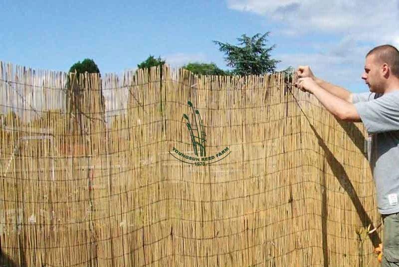 Peeled Reed Fence Buy Peeled Reed Fence Reed Curtain