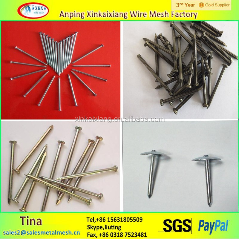 q235 q195 electro galvanized nails iron common nails Supply common nails