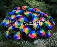 100 pcs/bag, Rainbow Chrysanthemum Flower Seeds, rare color ,new arrival DIY Home Garden flower plant