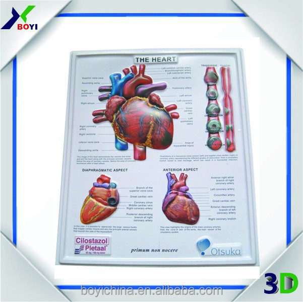 Custom 3d Medical Human Anatomy Poster For Heart Structure - Buy 3d ...