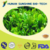Nautral Green Tea Extract 30% L- Theanine /Camellia sinensis extract