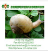 Snail Extract Powder Animal Extract for Skin/Protease Protein