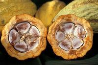 ivory coast cocoa beans