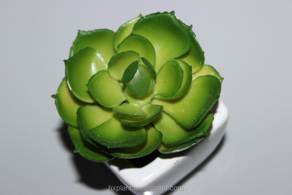 gro handel tropische pflanzen kaufen kaufen sie die besten. Black Bedroom Furniture Sets. Home Design Ideas
