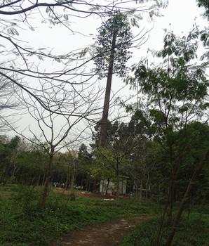 Steel Mono Pine Tree Tower Telecom Equivalent Monopole Lighting Cellular Communication