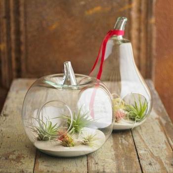 Glass Vase Bottle Plant Flower Pot Hanging Diy Decor Terrarium Clear