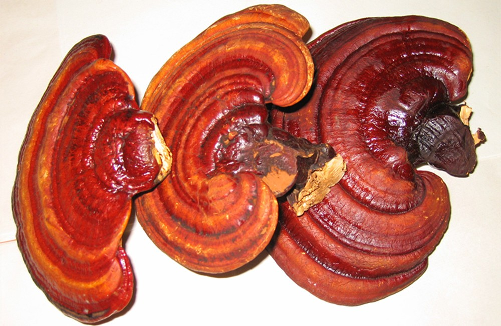 Reishi Mushroom Dried Reishi Mushroom, Mushroom lingzhi, Ganoderma Lucidum Extract Reishi(Ganoderma) Extract