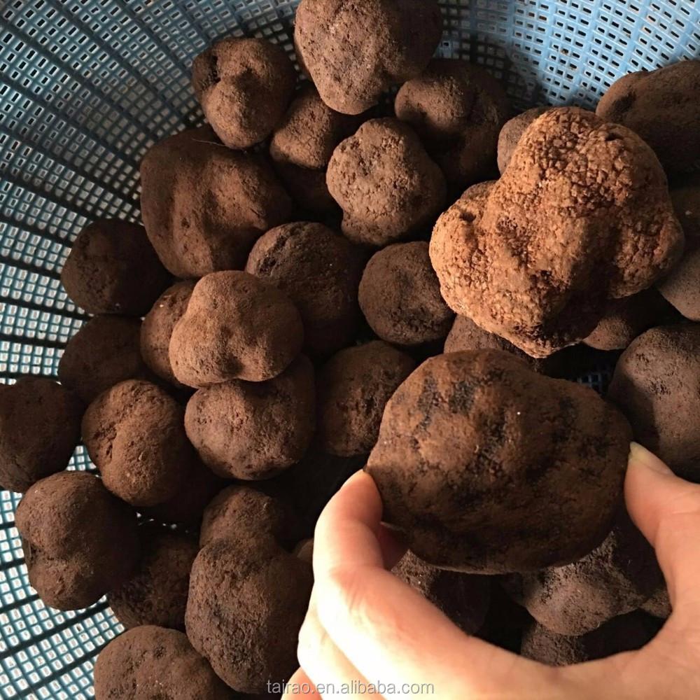 Truffles Mushrooms Price Wholesale Price Truffle Mushroom Stock A Lot Black Truffle 4~7cm