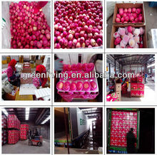2012 yantai fresh delicious fuji apple with timely delivery