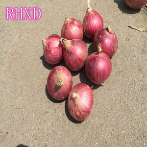 sri lanka onions importers onions for sale