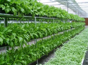 Attirant Vertical Farming Hydroponic Commercial System