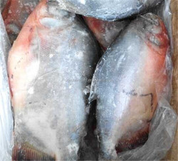 chinese farmed pacu fish whole round