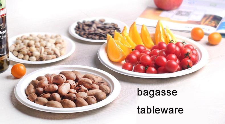 BAGASSE (4)