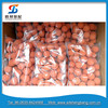 PM / SANY / KCP construction machinery parts / DN100 concrete pump pipe cleaning sponge ball