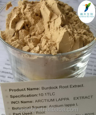 Supply Natural Edible Burdock Root / Burdock Root Extract Powder for Lowering blood pressure