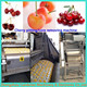 Large diameter 40mm fruit pitter automatic cherry pit remove machine with lowest price