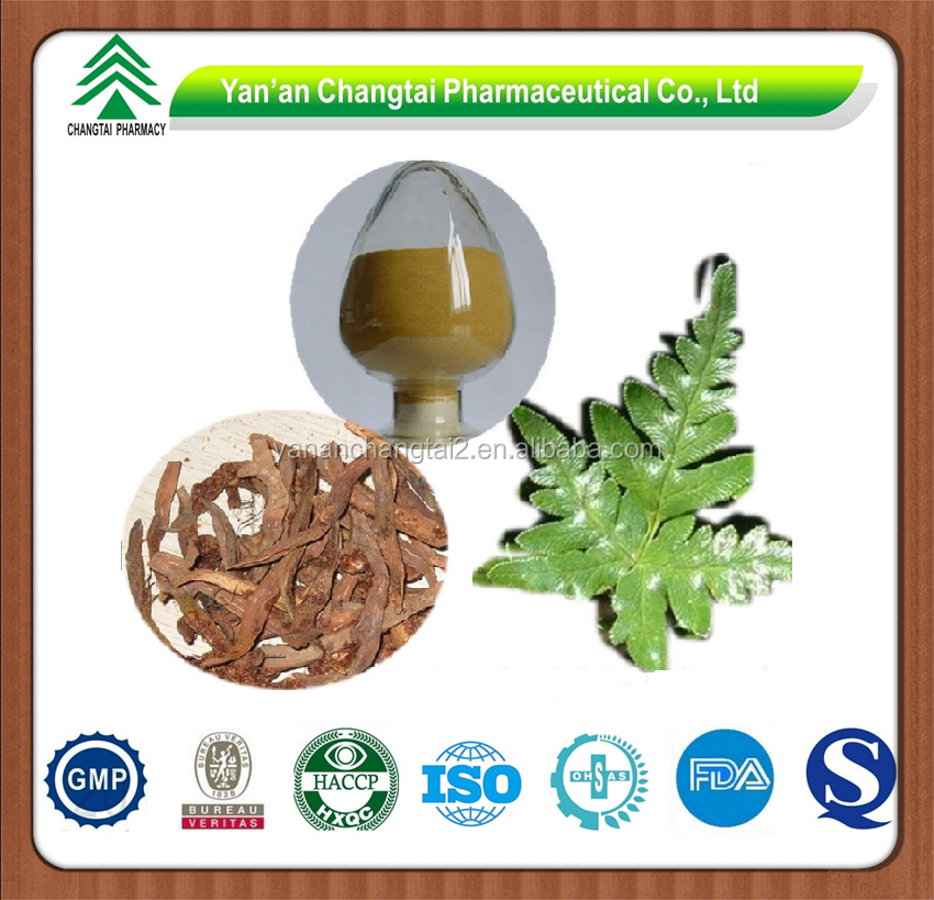 GMP factory supply herb Rhizoma Drynariae P.E. Drynaria
