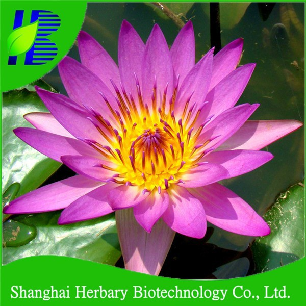 Easy survival lotus root seeds for sale buy lotus root seedslotus easy survival lotus root seeds for sale buy lotus root seedslotus seedsdifferent types of seeds product on alibaba mightylinksfo