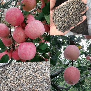 Touchhealthy supply Apple seeds for planting as fruit tree seeds
