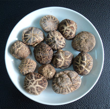 Fresh and healthy Mushroom with best selling