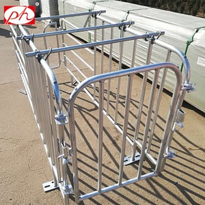 Wholesale steel or hot dip galvanized pig gestation sow stall