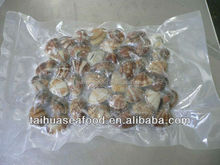 Frozen IQF Cooked Short Necked Baby Clams (plain bag)