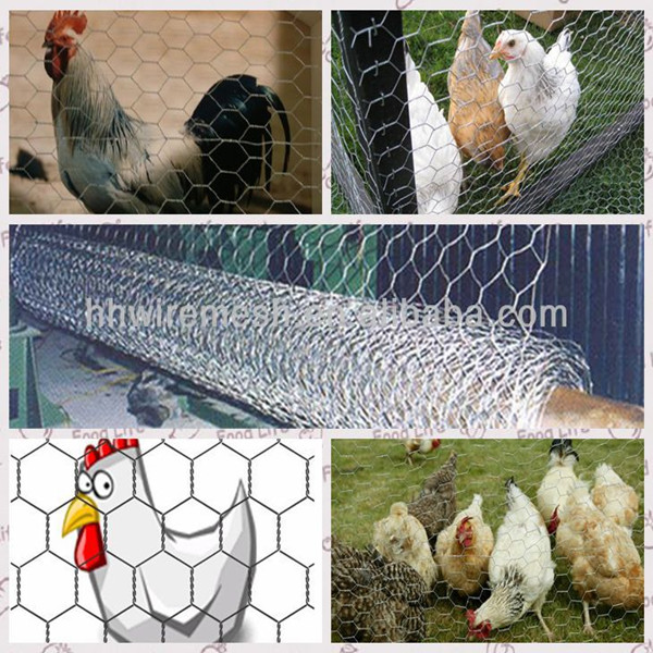 china factory price lowes chicken wire mesh roll 1 inch galvanized welded wire mesh china factory price lowes chicken wire mesh roll 1 inch galvanized