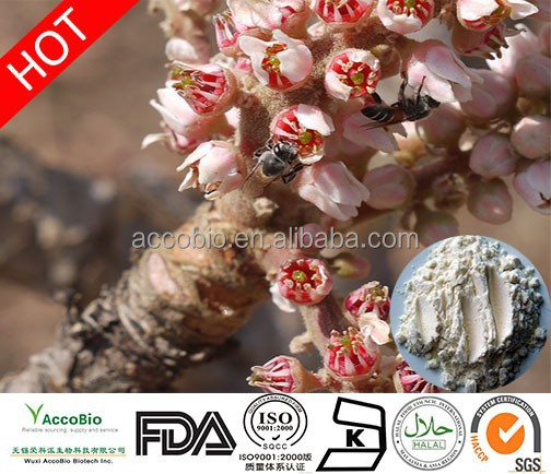 Free Sample Boswellia 65%Boswellic Acid,Boswellia Extract Powder