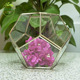 Modern Succulent Planter Wedding Succulent Collection Plants in 2 inch Pots / wholesale diamond glass candle jars with glass lid