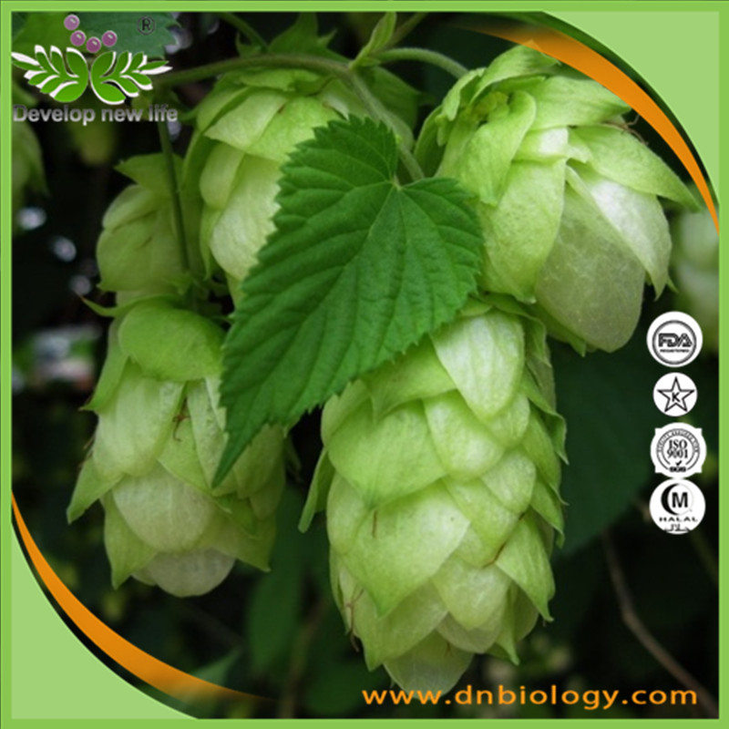 High quality Hops flower Extract 10:1, 5%, 90% Xanthohumol, 1-10% Flavones for health supplement