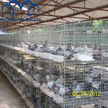 Guangzhou Factory Pigeon Cages For Saudi Arabia Market Pigeon Layer Cage -  Buy Pigeon Layer Cage,Pigeon Cages,4 Tiers Pigeon Cage Product on