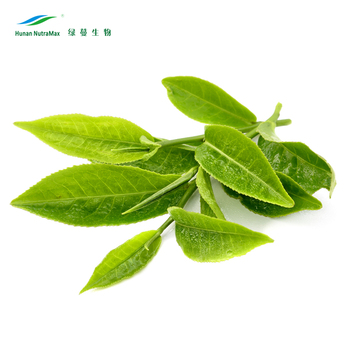 100% Nautral Green Tea Extract 30% L- Theanine, Camellia sinensis extract
