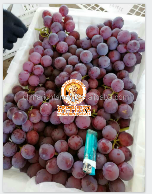 Wholesale Price Red Fresh Grape