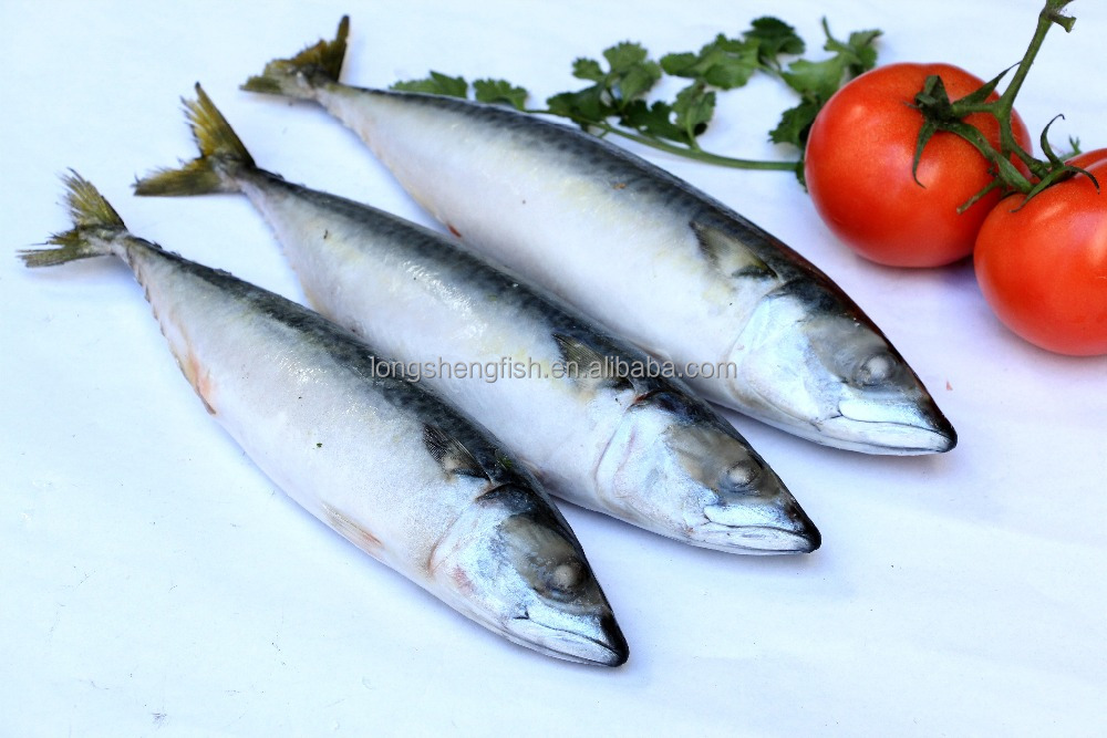 good freshness of pacific mackerel