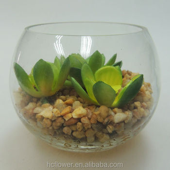 Recently Popular Home Decorating Glass Pot Plant Buy Recently